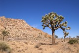 The eerily beautiful landscape of Joshua Tree National Park