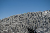Mountain range with frozen trees covered by snow