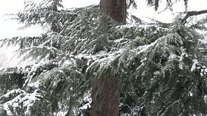 nevicare