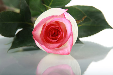 Rose on mirror table