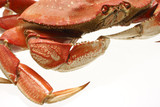 A cooked dungeness crab isolated on white