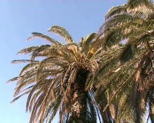 Palme e vento