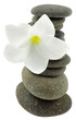 fleur blanche frangipanier pyramide galets fond blanc