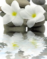 décor zen duo frangipanier galets reflets