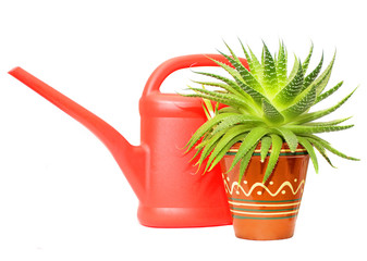 watering can and green plant