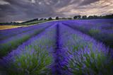 Fototapety Lavender Sunset 1