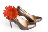 Beige-golden female new varnished shoes poster