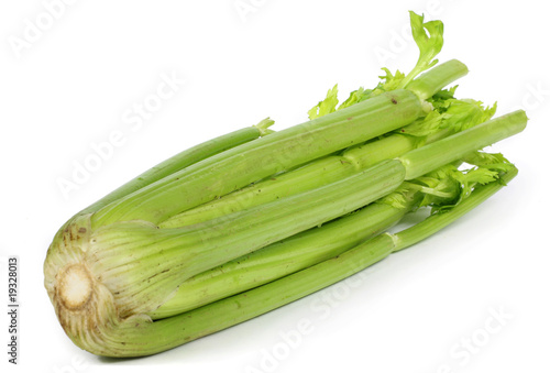a single celery close-up white background