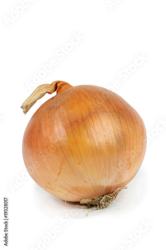 a single onion closeup white background