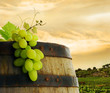 Wine barrel and grape with vineyard in background