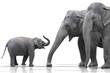 Quadro Elefantenfamilie wd379