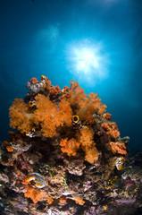 récif en Indonésie, Bunaken