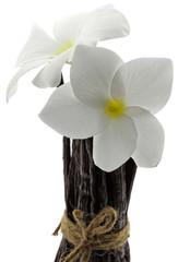 botte vanille Bourbon fleurs frangipanier fond blanc
