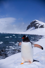 At the end of Earth, penguin in Antarctica