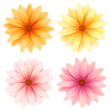 Fototapety Vector daisy flowers set  isolated on white