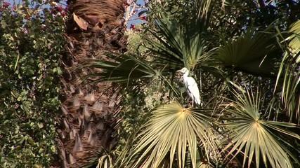 Vogel auf Palme