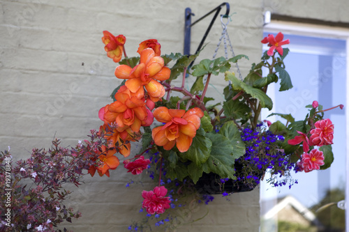 plant pots with begonias hanging on the wall of the English home