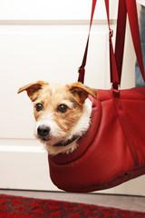 Kleiner Hund in Transporttasche