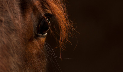 portrait equestre