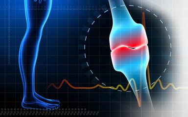 Human leg bone joint and leg