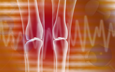 Human leg bone