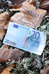 20 Euro banknote in frozen grass