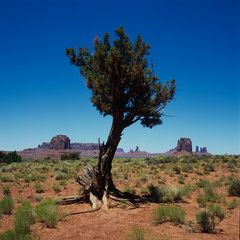 Baum im Monument Valley, Utah, USA