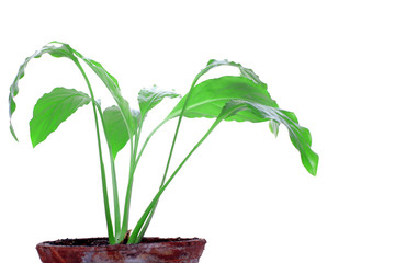 young plant in a vintage clay pot isolated on white