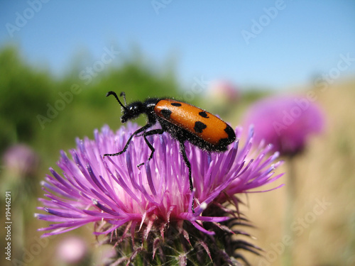Insect on meadow colors