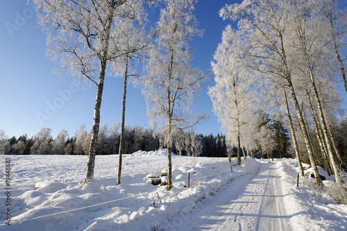 road through snow-scape