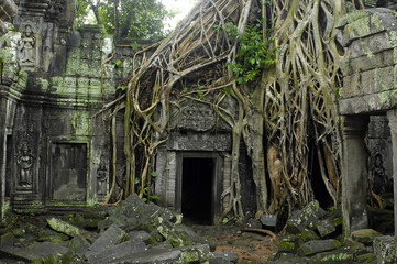 Angkor / Ta Prohm-Temple