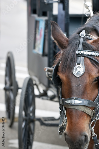 Closeup of horses head with carriage behind