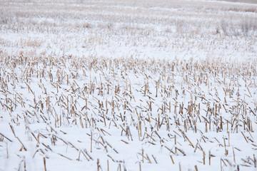 Acker im Winter