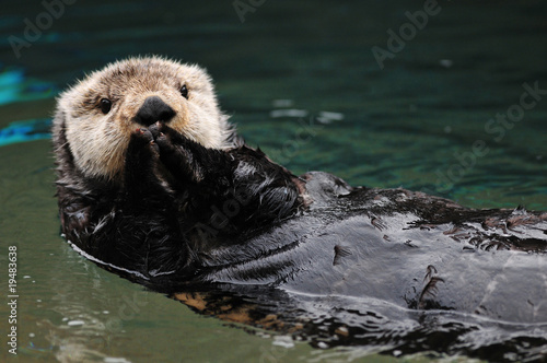 Leinwandbild Motiv Otter greeting