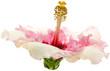 hibiscus rose pastel fond blanc