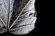 macro frozen leaf