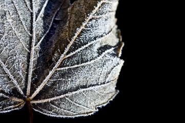 macro frozen leaf