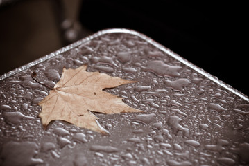tree leaf on table holding rainwater