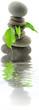 décor zen minéral végétal aquatique fond blanc