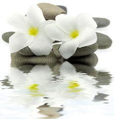 décor zen minéral floral aquatique fond blanc