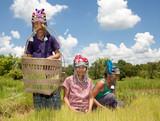 Frauen Akha am Reisfeld