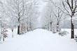 schneebedeckte allee