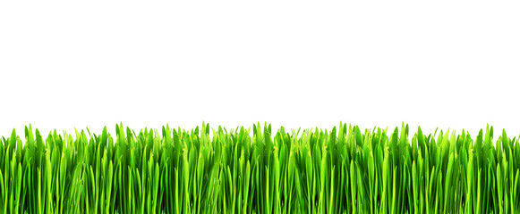 Fresh green grass on white