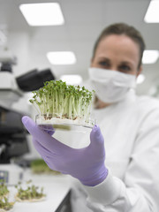 Scientist holding petri dish with sprouts