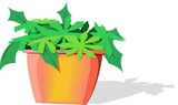 Illustration of pot with plant