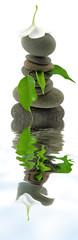 composition zen aquatique fleur galets feuilles fond blanc