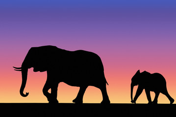 Elephant family on sunset