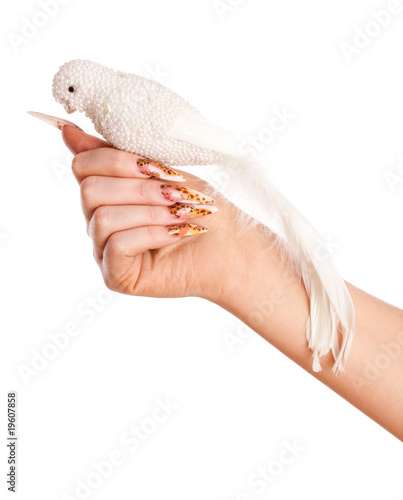 Hand with beautiful leopard spots manicure hold white parrot