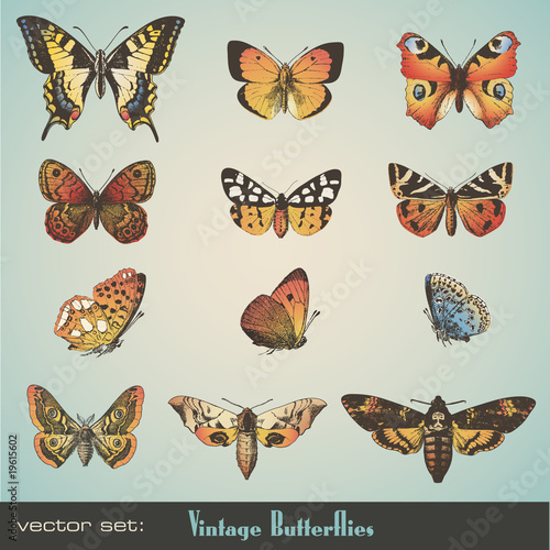 wektor zestaw: vintage motyle
