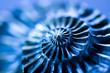 Ammonit, makro